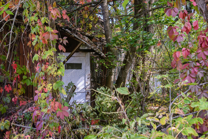 Chernobyl coberto de vegetação fotografia de stock