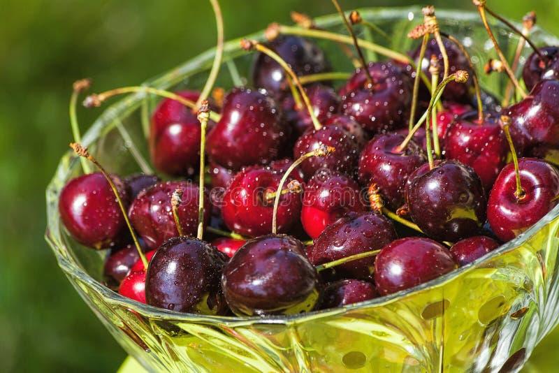 Cherries in bowl royalty free stock image