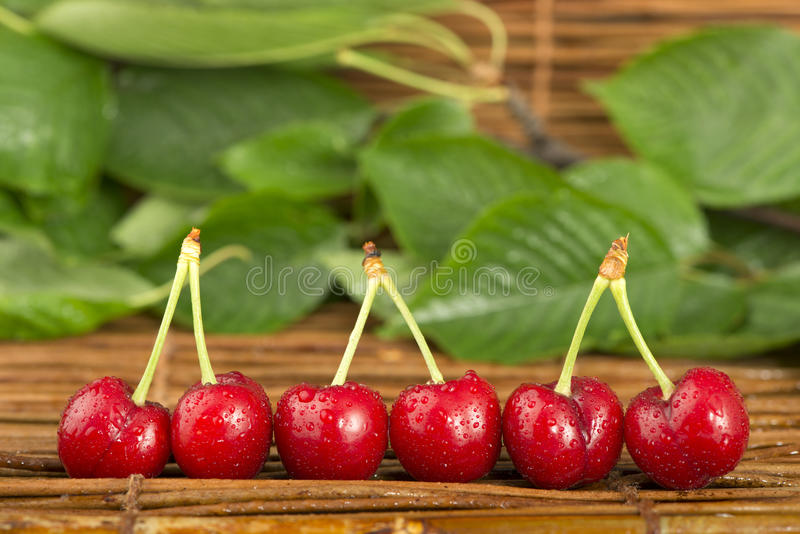 Download Cherries And Branch With Leaves Royalty Free Stock Photography - Image: 31369247