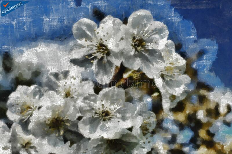 Cherries - ID: 16218-130702-3032 royalty free stock image