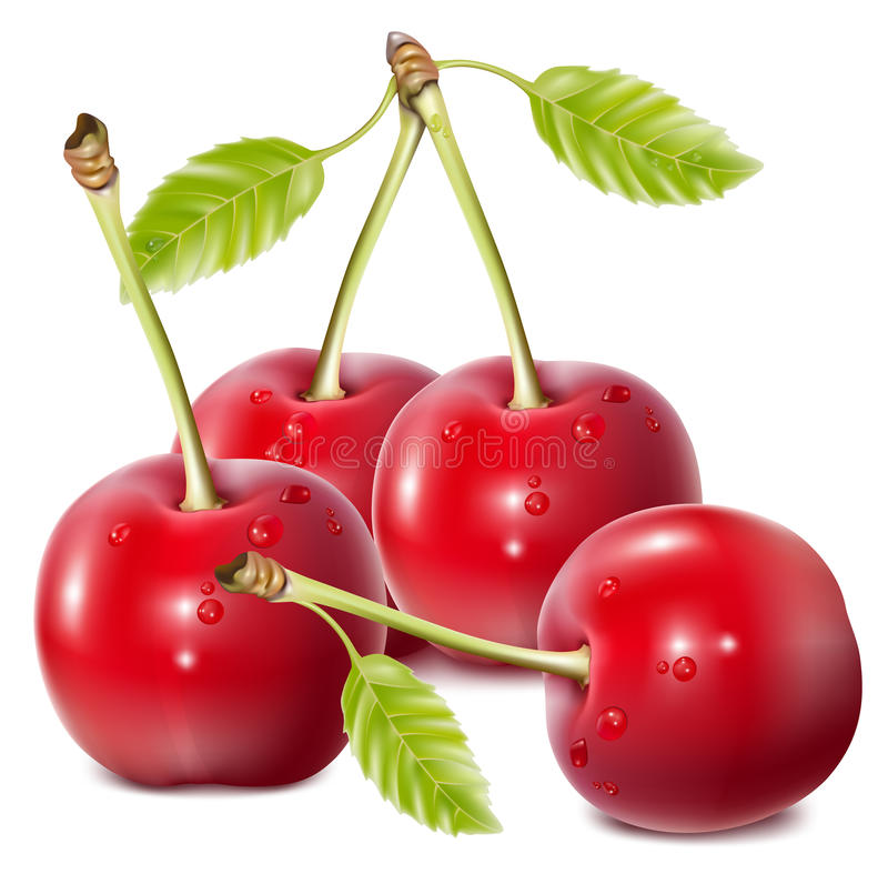 Cherries with water drops. Vector illustration. Cherries with water drops royalty free illustration