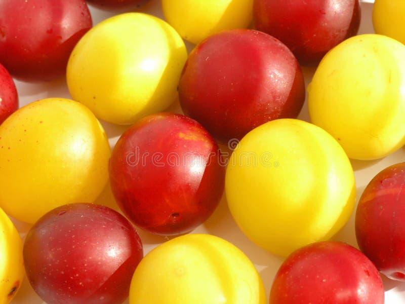 cherry śliwki obraz stock