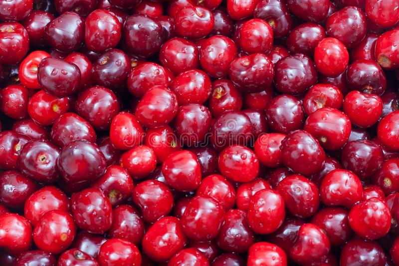 Download Cherry stock image. Image of cute, berry, ripe, eating - 24996927