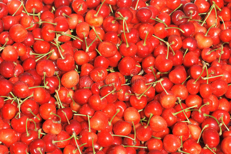 Download Cherry stock photo. Image of fruitery, fruits, harvest - 25050552