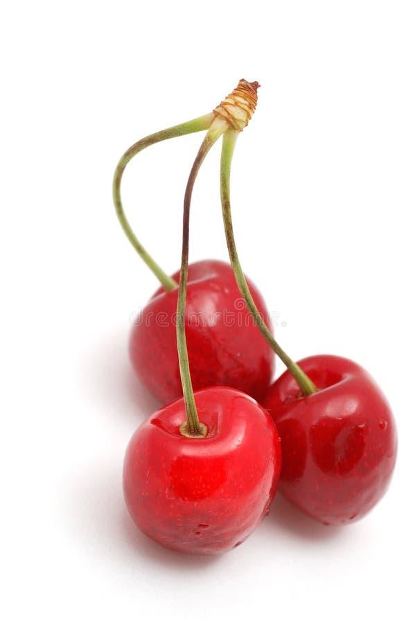 cherry obraz royalty free