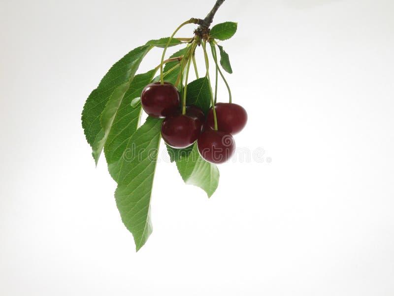 Cherry Royaltyfri Bild