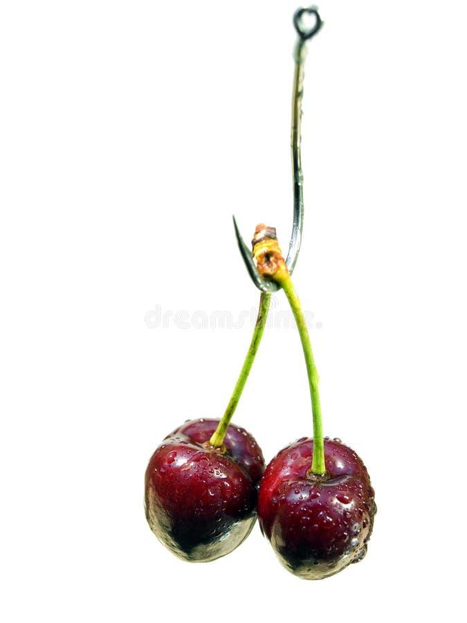Free Cherry Bait Royalty Free Stock Photo - 10013445