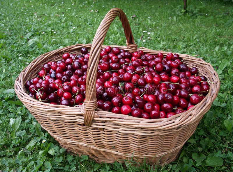 Download Cherry - basket - fruitage stock photo. Image of fruit - 958490