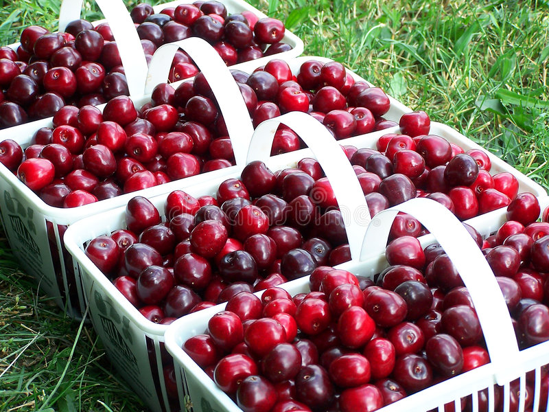Download Cherry Baskets stock photo. Image of sweet, juicy, baskets - 166068