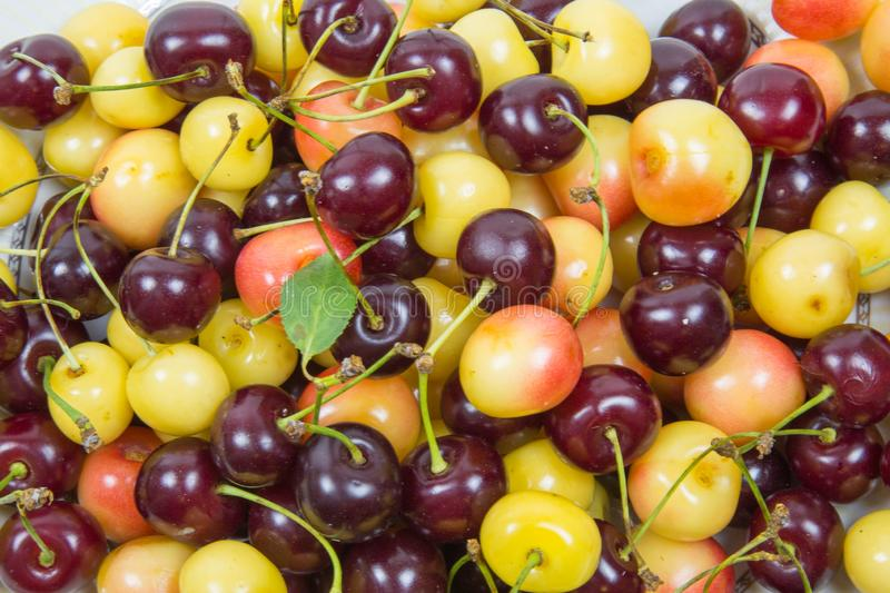 Cherry berries cherry red pink yellow with cuttings leaves stock photography