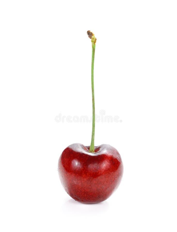 Cherry Berry lokalisierte auf weißem Hintergrund lizenzfreies stockbild