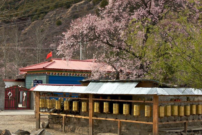 Cherry Blooming, Nyingchi, Tibet fotografia de stock