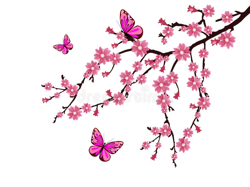 Download Cherry blossom stock illustration. Image of nature, isolated - 18892753