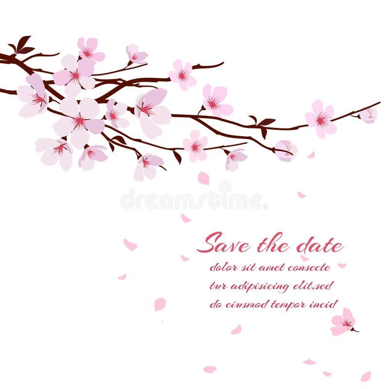 Cherry Blossom illustration stock