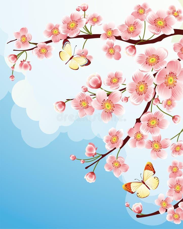 Cherry blossom royalty free illustration