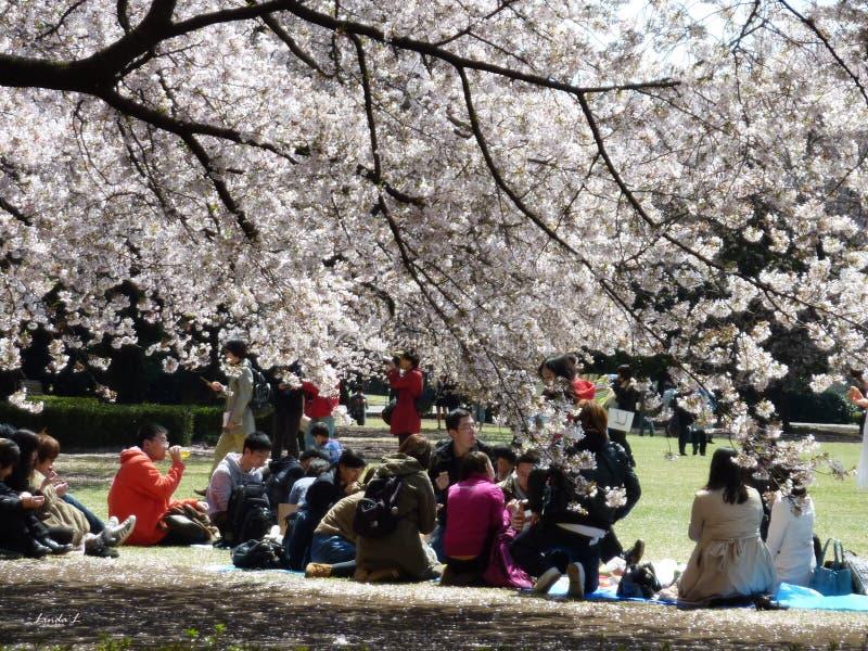Cherry Blossom royalty-vrije stock foto's