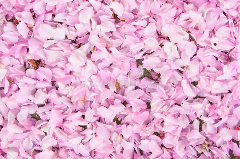 Download Cherry Blossom image stock. Image du bourgeon, avril - 45354107