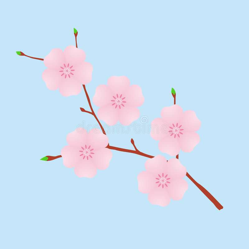 Cherry blossom royalty free illustration