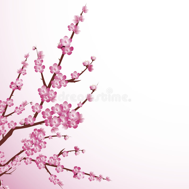 Download Cherry blossom stock vector. Illustration of leaf, japan - 9110754