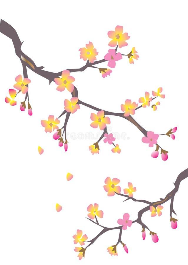 Download Cherry blossom stock vector. Illustration of elegant, design - 9957837