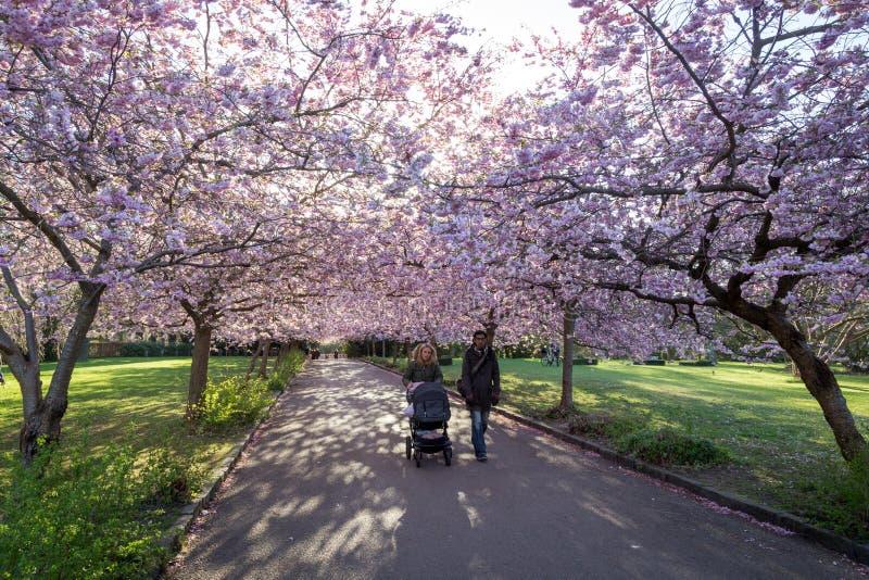 Sakura Festival Köpenhamn