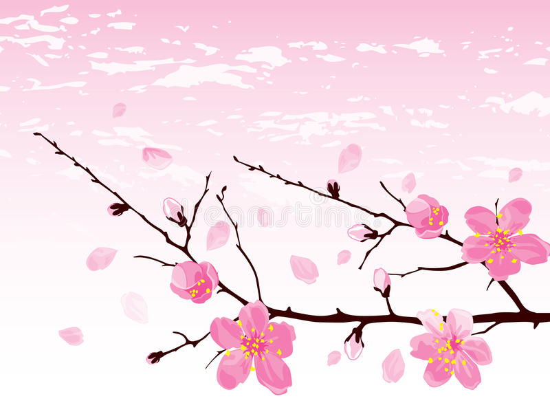 Download Cherry Blossom Branch Royalty Free Stock Photography - Image: 10248617