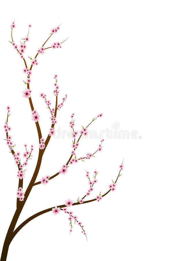 Download Cherry blossom branch stock vector. Image of macro, background - 18442367