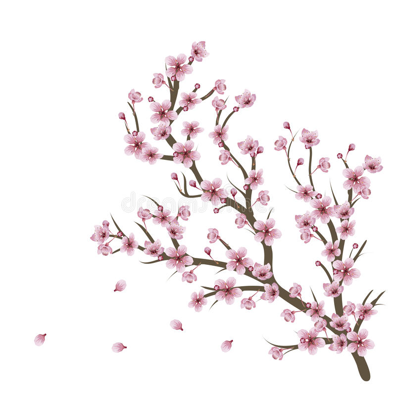 Cherry Blossom Branch ilustração royalty free