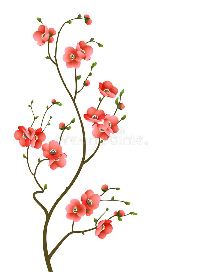 Cherry blossom branch abstract background vector illustration