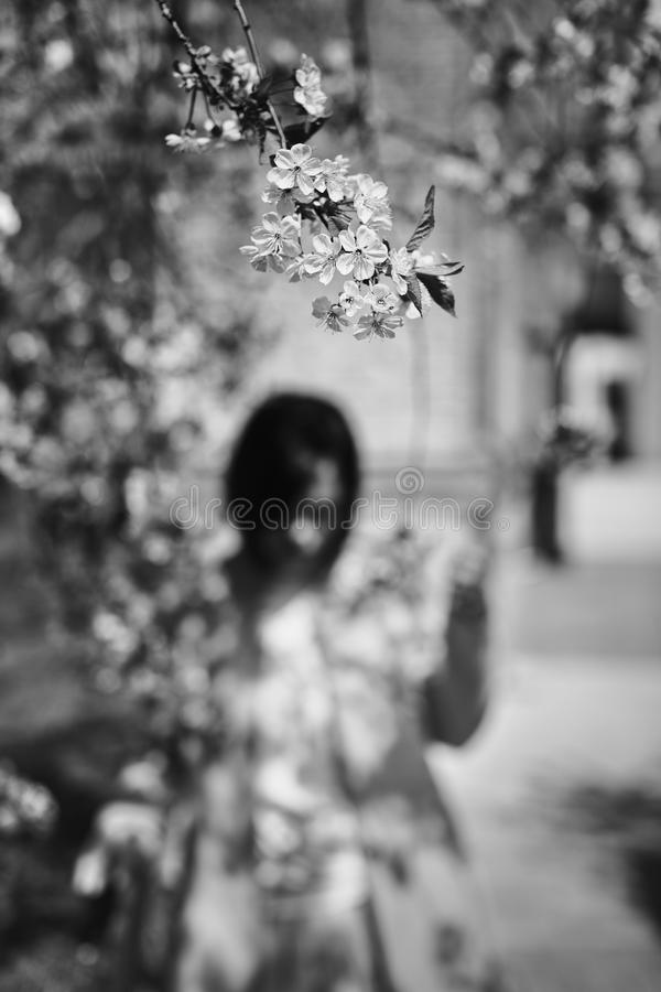 Cherry blossom branch. On the back of the blurry terms feminine silhouette. stock images