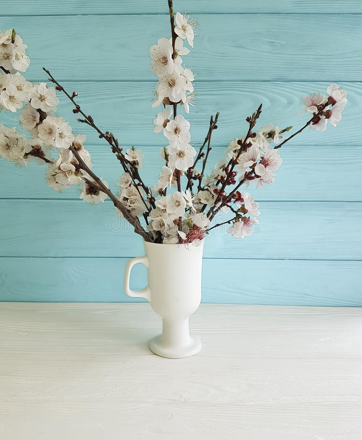 Cherry blossom branch floral decorative beautiful in a vase on a colored wooden background, spring,bouquet royalty free stock images