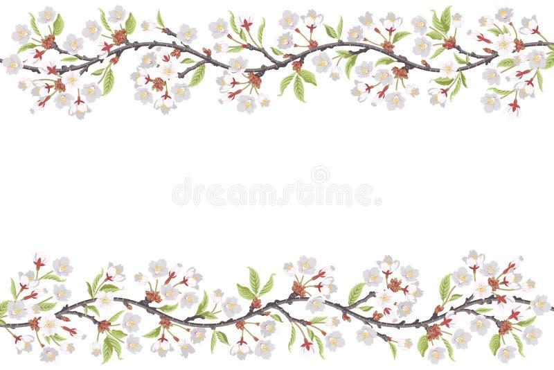 Cherry Blossom Branch ram royaltyfri illustrationer