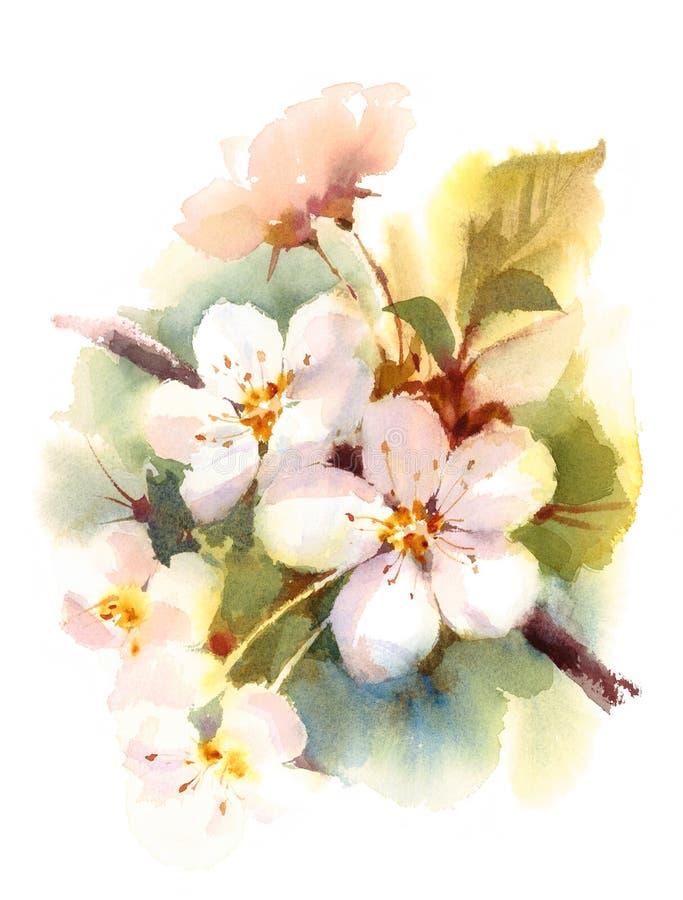 Cherry Blossom Branch Spring Flowers-Aquarell-Hintergrund-Illustration handgemalt lizenzfreie abbildung