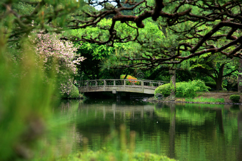Download Cherry blossom and bridge stock photo. Image of arch, lake - 6239540