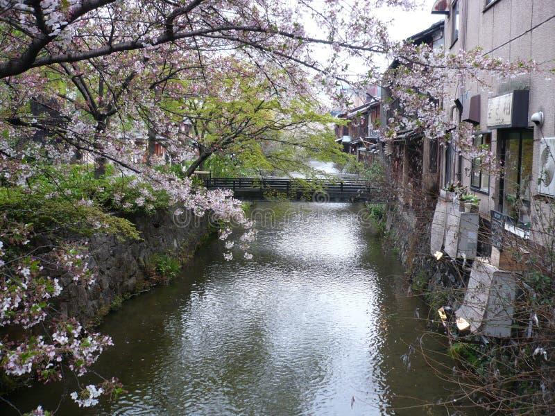 Cherry Blossom Canal imagem de stock