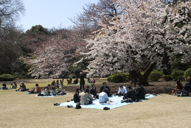 Cherry blossom celebration in Tokyo royalty free stock photos