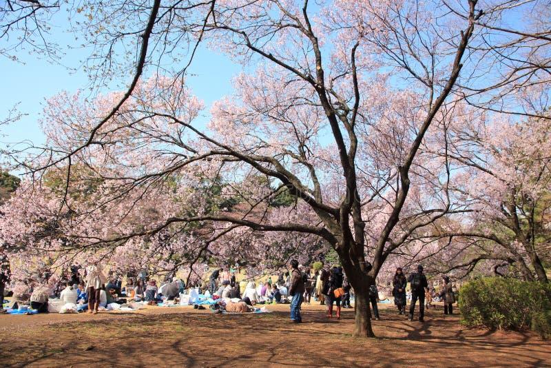 Cherry blossom celebration, Tokyo, March 2010 royalty free stock image
