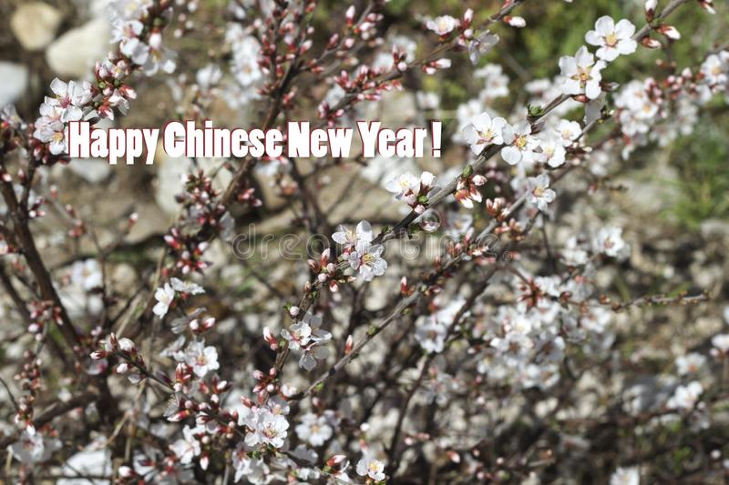 Chinese New Year background with Cherry blossom. Chinese New Year background with white Cherry blossom stock photos