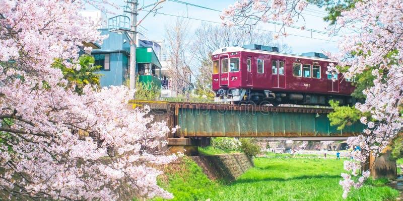 Cherry Blossom con el tren en el parque de Shukugawa - escénico famoso de Cherry Blossom en la ciudad de Nishinomiya, prefectura  imagenes de archivo