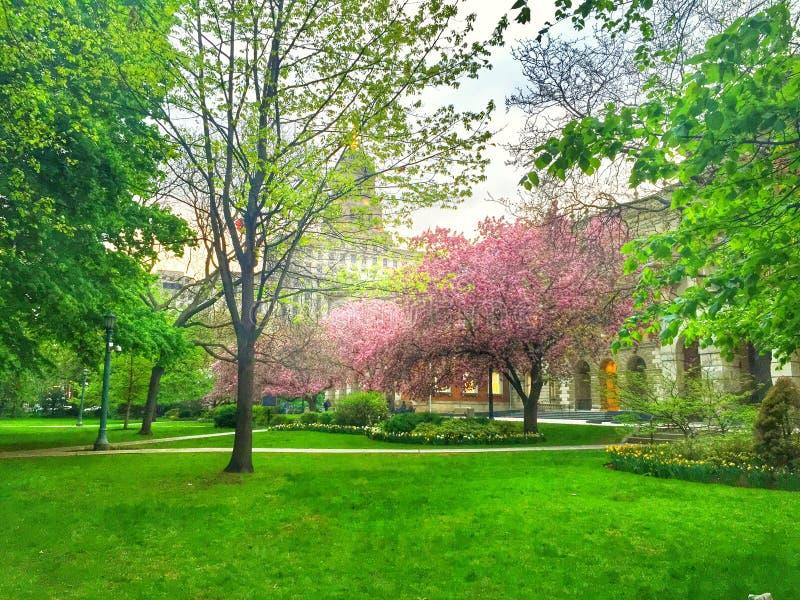 Cherry Blossom en Toronto en Osgoode Pasillo fotos de archivo libres de regalías