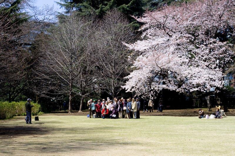 Cherry blossom festival royalty free stock image