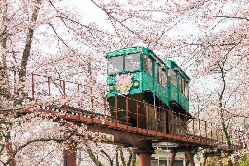 Cherry Blossom Festival at Funaoka Castle Ruin Park,Shibata,Miyagi,Tohoku,Japan on April12,2017:Slope car passing sakura tunnel. Funaoka Castle Ruin Park in royalty free stock photography