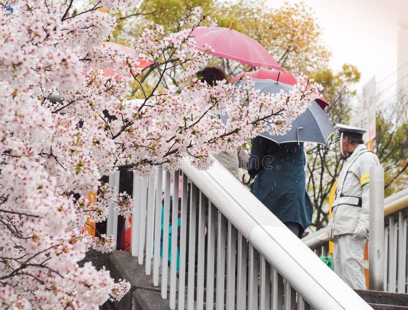 Cherry Blossom Festival Hanami in Osaka Mint Bereau stock afbeeldingen
