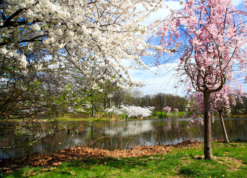 Download The Cherry Blossom Festival In New Jersey Royalty Free Stock Photo - Image: 9174005