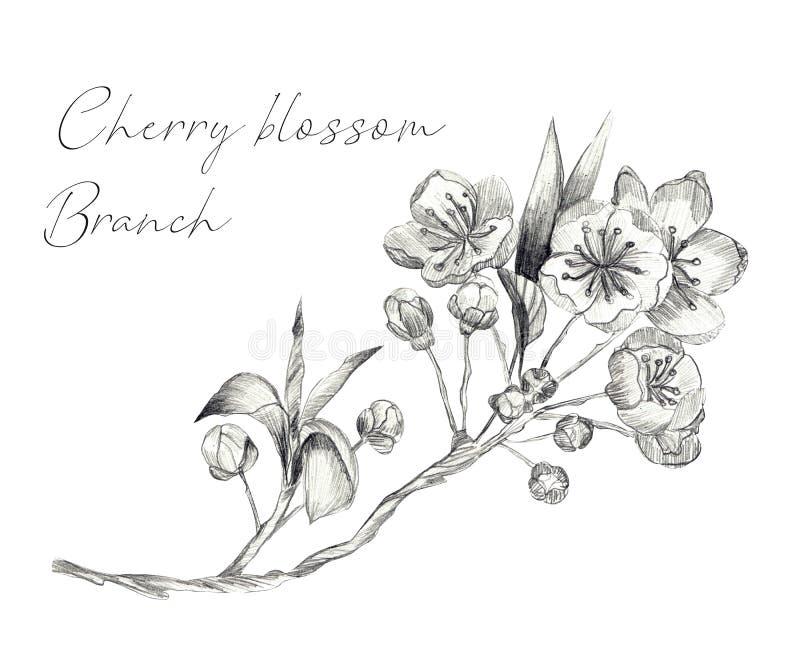 Cherry Blossom filial vektor illustrationer