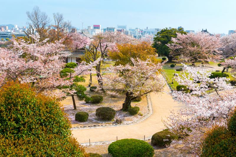 Cherry blossom garden with full of sakura in Hanami festival in stock photos