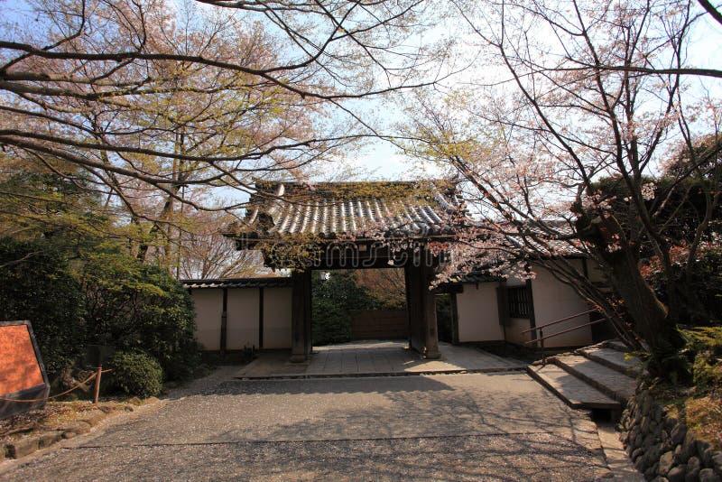 Cherry Blossom japón foto de archivo