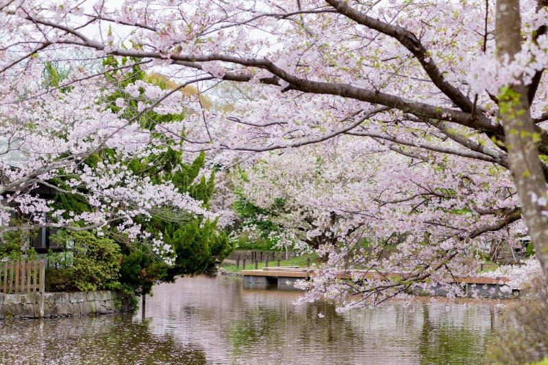 Cherry Blossom in Kamakura-Stad stock afbeeldingen