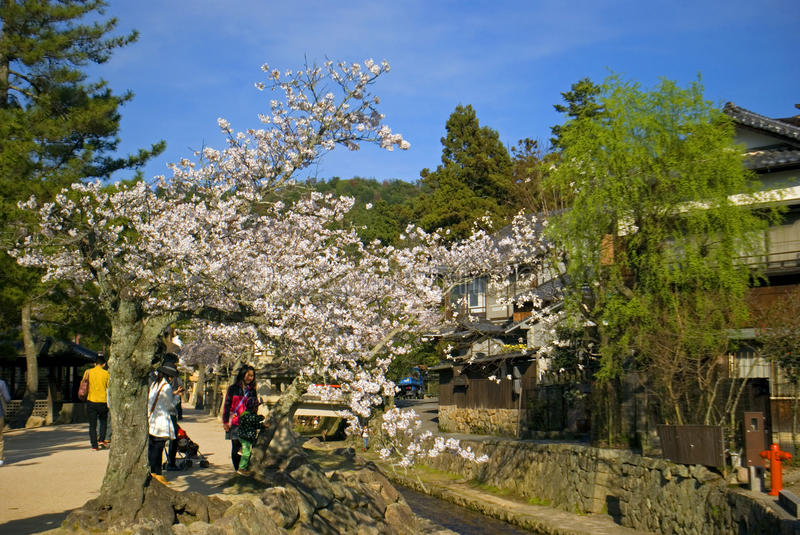 Cherry blossom, Miyajima, Japan. Cherry blossom at April 1, 2014 in Miyajima, Japan. Miyajima is a sacred island in japan, it is particularly beautiful during royalty free stock photography
