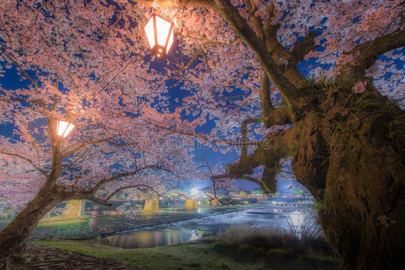 Cherry Blossom na ponte de Kintaikyo, Japão imagem de stock royalty free